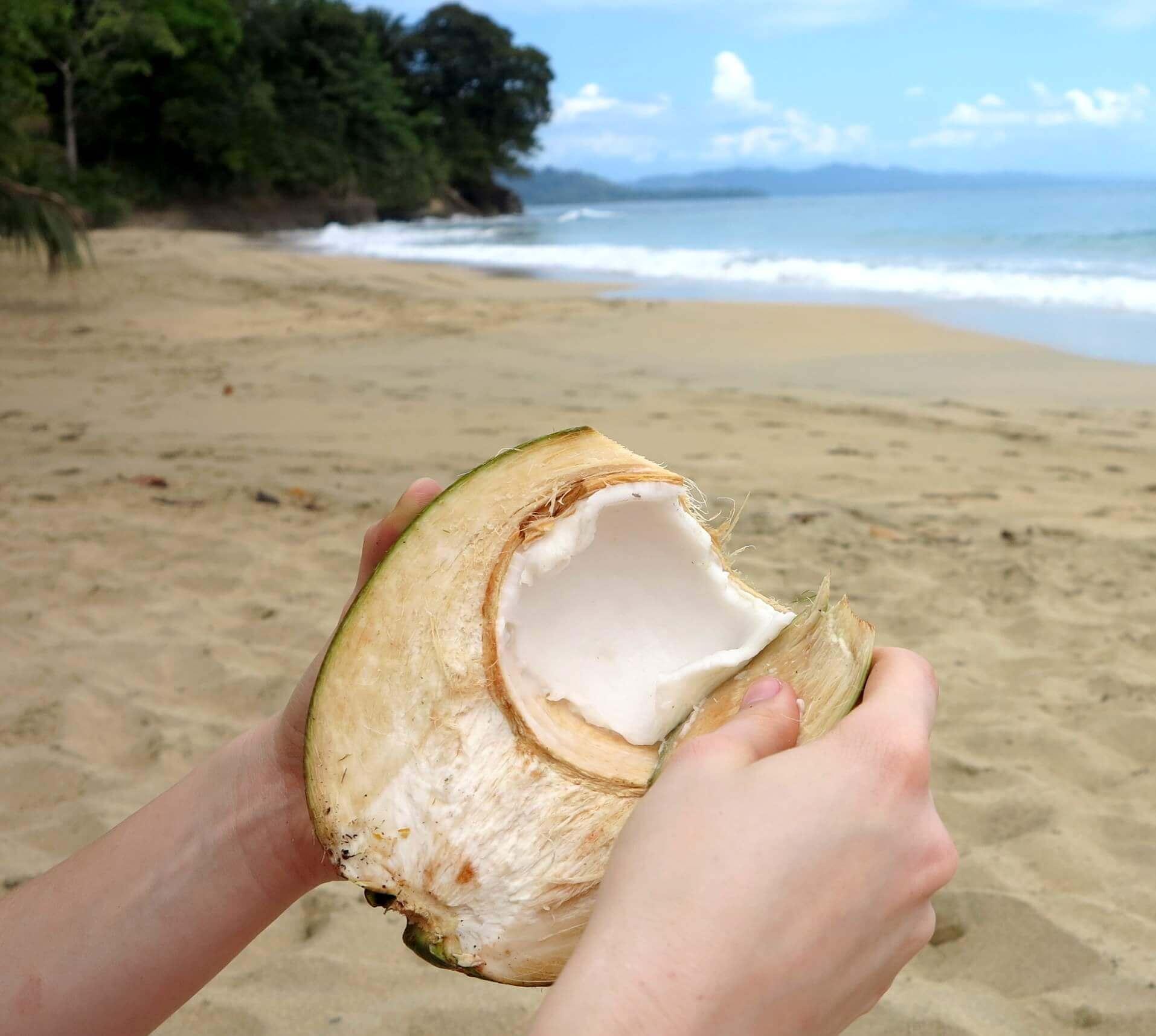 Das cremige Innere einer frischen Kokosnuss lässt sich mit einem Stück abgeschlagener Schale einfach herausschaben