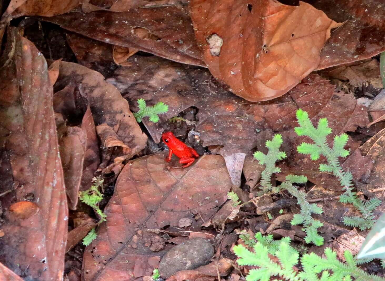 Der botanische Garten von Puerto Viejo bietet auch eine große Anzahl an tropischen Tierarten zu entdecken
