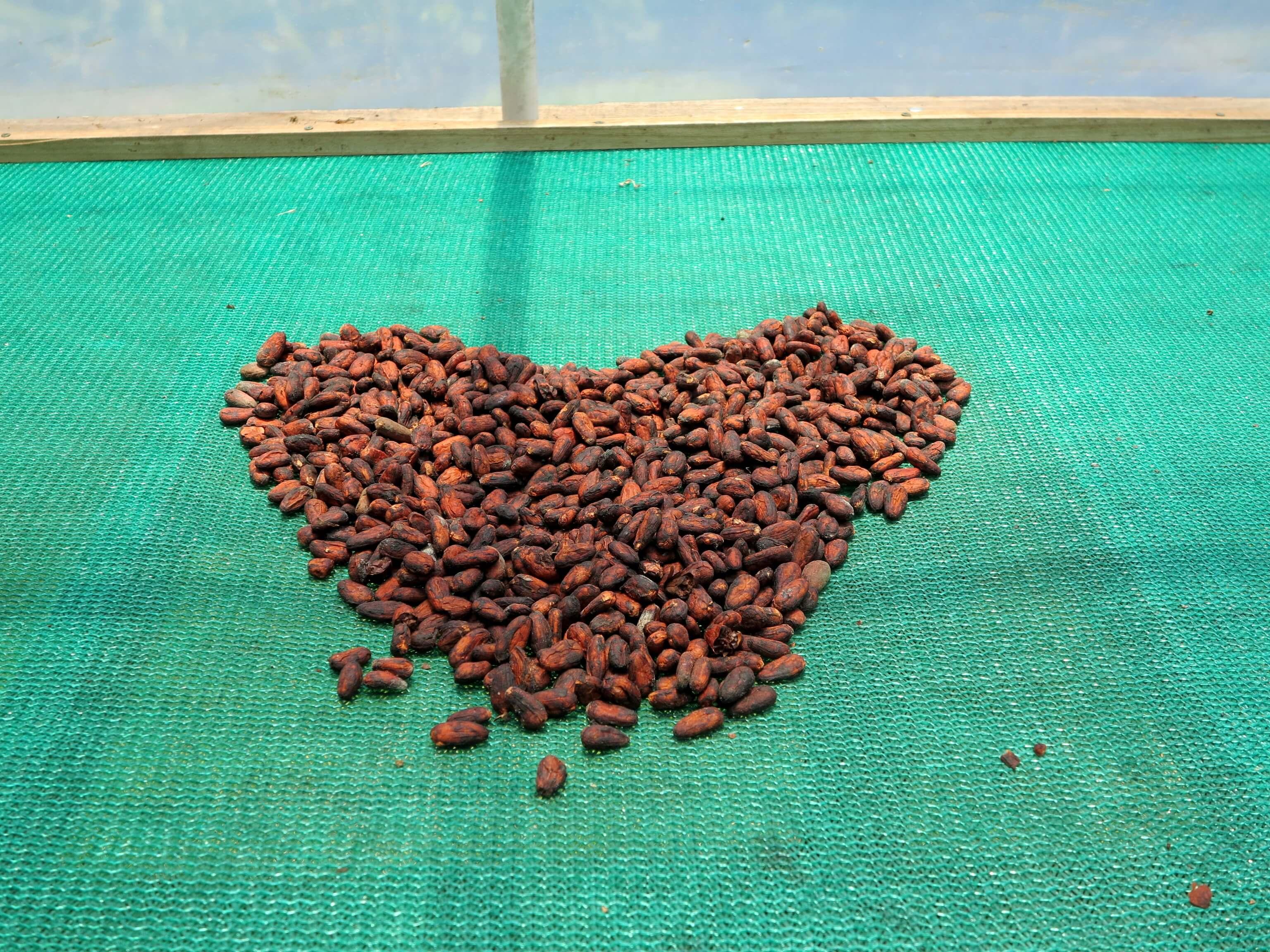 Geröstete Kakaobohnen sind schon ein super schmackhafter Snack