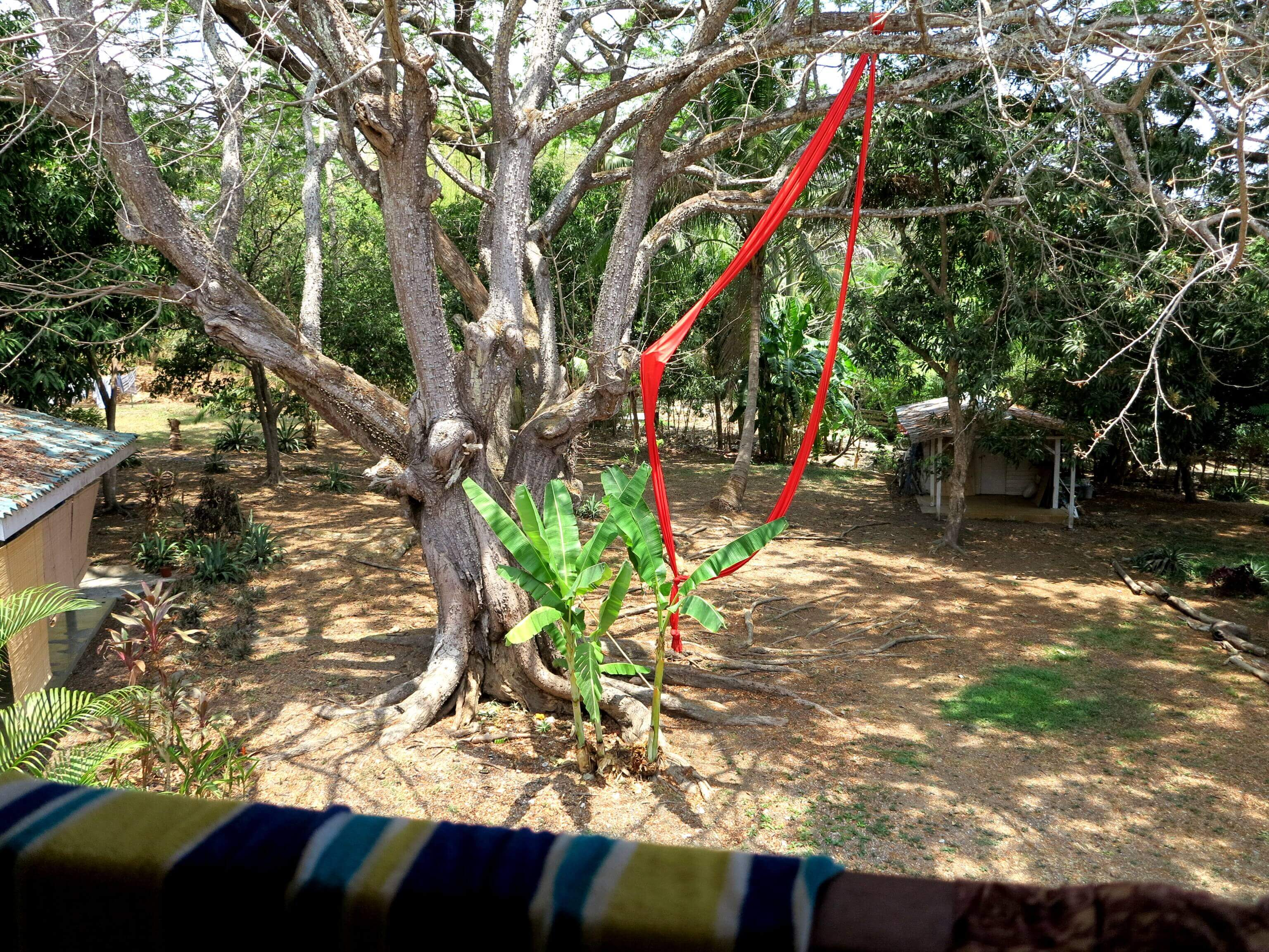 Tropischer Garten des Hostels