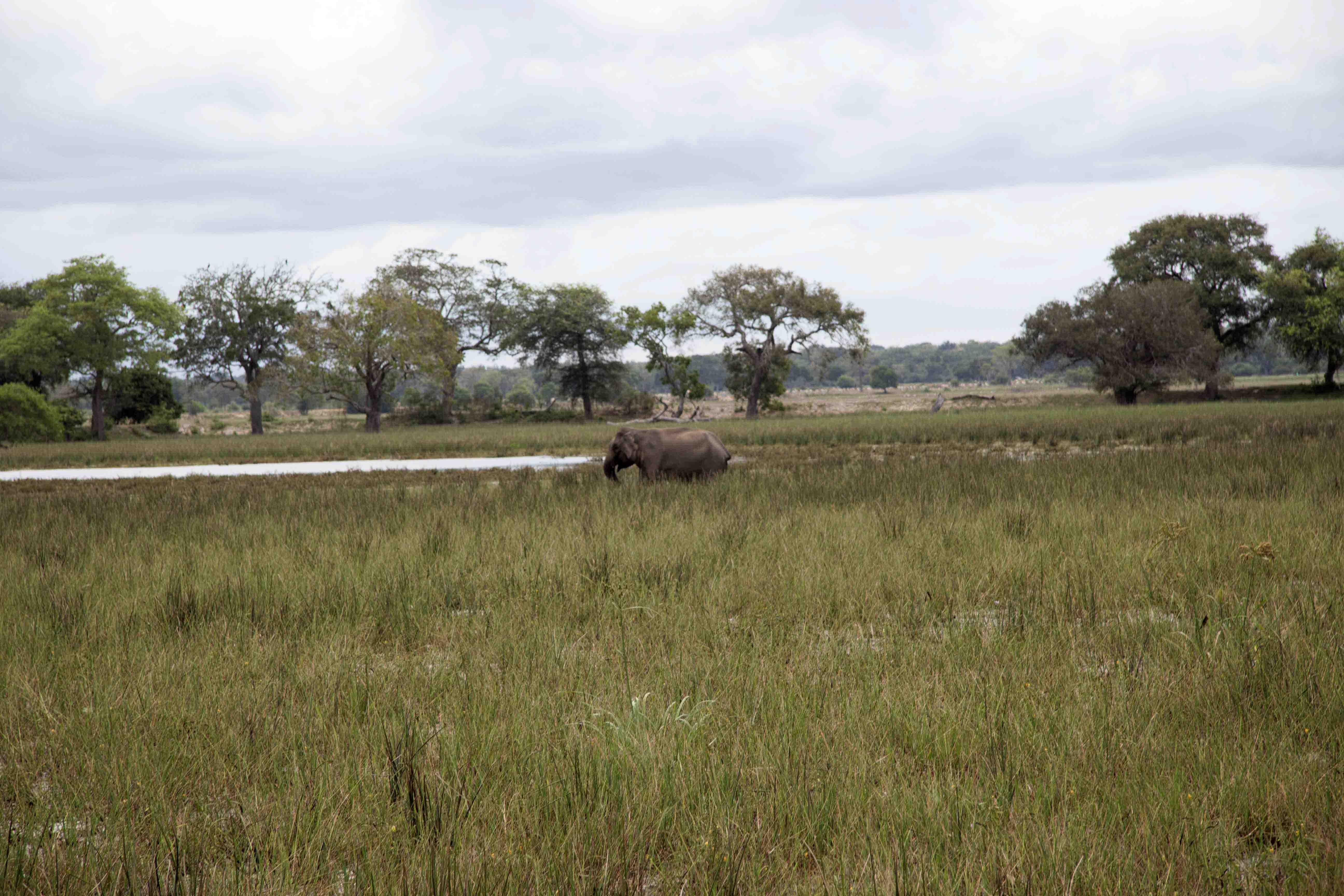 Safari durch den nördlichen Teil des Yala Nationalparks