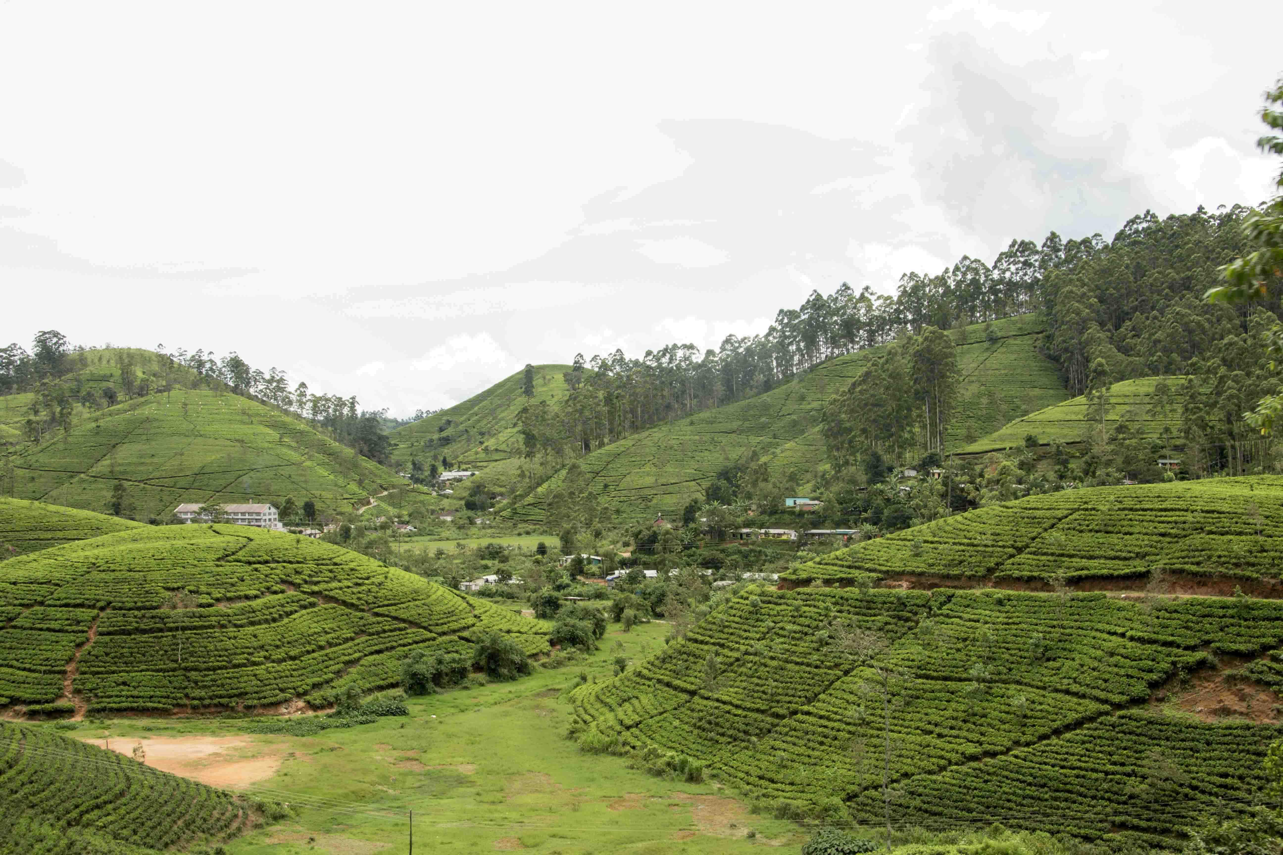 Zugfahrt von Kandy nach Ella - Teeplantagen des Berglands Sri Lankas